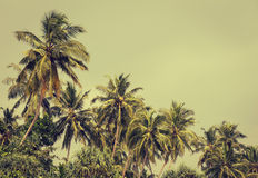 Coconut palm trees and mangrove in tropics Royalty Free Stock Photo
