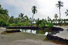 Coconut palm trees on mixed sand and lava beach, Puuhonua O Honaunau Place of Refuge National Park, Hawaii Stock Photos