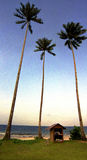 Coconut palm trees by ocean Royalty Free Stock Photos