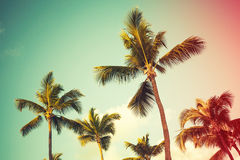 Coconut palm trees over bright sky background Stock Image