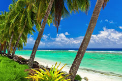 Coconut palm trees over the tropical beach of Rarotonga, Cook Is Stock Image