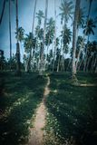 Coconut palm trees in park. Stock Photos