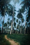 Coconut palm trees in park. Vintage tone Royalty Free Stock Image