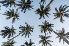 Coconut palm trees Stock Photos
