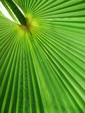 Coconut palm trees. Royalty Free Stock Image