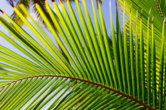 Coconut palm trees. Stock Images
