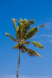 Coconut palm trees perspective view Royalty Free Stock Photography