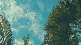 Coconut palm trees perspective view. Palm trees and blue sky stock video