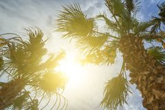 Bottom-up view of a beautiful palm tree with blue sunny sky royalty free stock photography