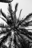 Coconut palm trees perspective view, Landscape in island. Royalty Free Stock Photos