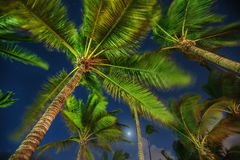 Coconut palm trees perspective view at night Royalty Free Stock Images