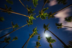 Coconut palm trees perspective view at night Royalty Free Stock Photos