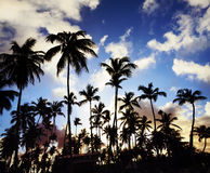 Coconut palm trees perspective view Stock Photography