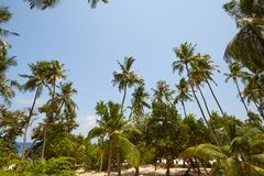 Coconut palm trees perspective view on exotical tropical island Stock Photo