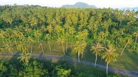 Coconut Palm Trees Plantation on Phuket Island. Tropical HD aerial birds-eye scene view. Thailand. Coconut Palm Trees Top Plantation on Phuket Island. Tropical stock video footage