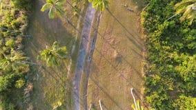 Coconut Palm Trees Plantation on Phuket Island. Tropical HD aerial birds-eye scene view. Thailand. Coconut Palm Trees Top Plantation on Phuket Island. Tropical stock footage