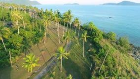 Coconut Palm Trees Plantation on Phuket Island. Tropical HD aerial birds-eye scene view. Thailand. Coconut Palm Trees Top Plantation on Phuket Island. Tropical stock video