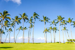 Coconut Palm trees on the Poipu beach in Hawaii Stock Photos