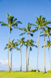 Coconut Palm trees on the Poipu beach in Hawaii Stock Photo