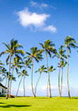 Coconut Palm trees on the Poipu beach in Hawaii Stock Image