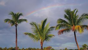 Coconut palm trees and rainbow against blue tropical sky with clouds. Summer tropical vacation