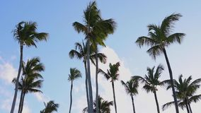Coconut palm trees and rainbow against blue tropical sky with clouds. Summer tropical vacation stock video footage