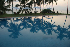 Coconut palm trees reflecting in the water pool Stock Image