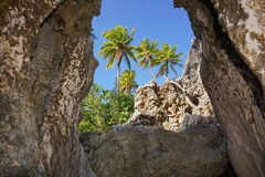 Coconut palm trees between rocks French Polynesia Stock Image