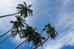 Coconut palm trees and rocky landscape Royalty Free Stock Photography