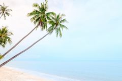 Coconut palm trees on sand beach and calm sea. With cloudy blue sky Stock Photos