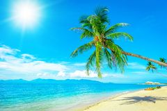 Coconut palm trees on sandy beach near the sea. Summer holiday a Royalty Free Stock Photography