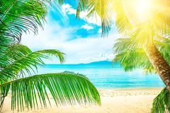 Coconut palm trees on sandy beach near the sea. Summer holiday a Stock Image