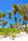Coconut Palm trees on the sandy beach in Stock Image