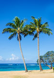 Coconut Palm trees on the sandy Poipu beach in Hawaii Stock Image