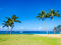 Coconut Palm trees on the sandy Poipu beach in Hawaii Stock Photos