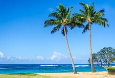 Coconut Palm trees on the sandy Poipu beach in Hawaii Stock Images