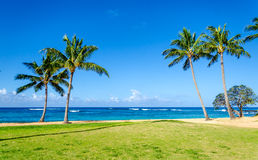 Coconut Palm trees on the sandy Poipu beach in Hawaii Royalty Free Stock Images