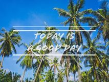 Coconut palm trees scene stock photo
