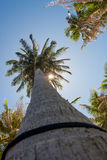 Coconut palm trees and the shining sun, bottom view, in the tropical island Phangan, Thailand. Coconut palm trees and the shining sun, bottom view, in the Stock Photography