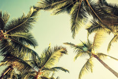 Coconut palm trees and shining sun over bright sky Royalty Free Stock Image