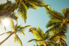 Coconut palm trees and shining sun over bright sunny sky Royalty Free Stock Photo