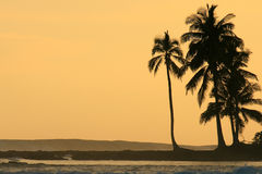 Coconut palm trees silhouetted at sunset Stock Images