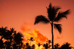 Coconut palm trees silhouettes over bright red sky Stock Photos