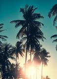 Coconut palm trees silhouettes at sunset. Royalty Free Stock Images