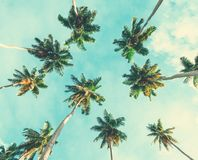 Coconut palm trees on sky background. Toned image. Low Angle View. Coconut palm trees on sky background. Toned image.  Low Angle View Stock Photos