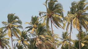Coconut palm trees and sky stock footage
