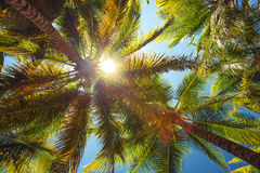 Coconut palm trees and the sun perspective view Stock Photos