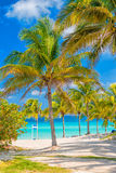 Coconut palm trees  on a sunny day at a cuban beach. Coconut palm trees  on a sunny day at Varadero beach in Cuba Stock Images