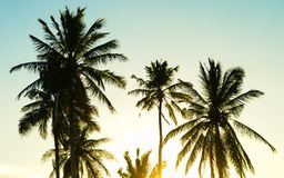 Coconut palm trees with a sunset backdrop stock photo