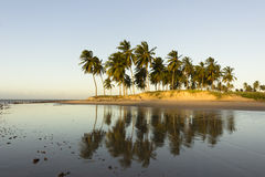 Coconut palm trees - Sunset on the beach, RN, Brazil Stock Image